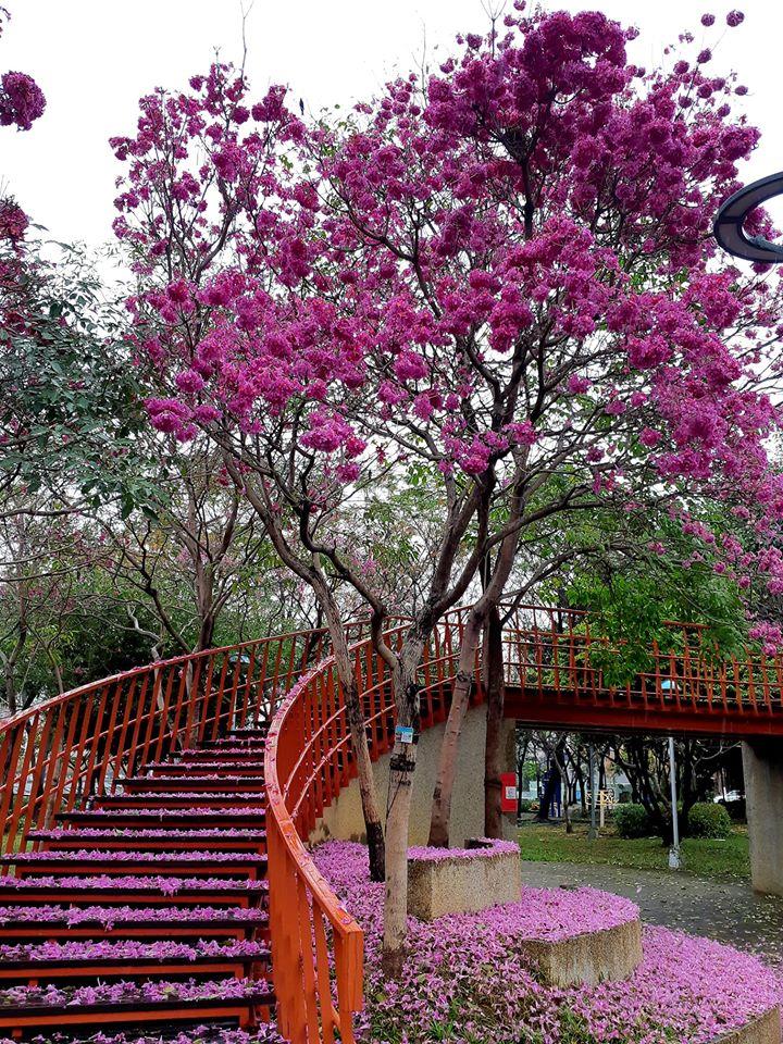 台中三甲公園
